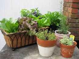 Vertical Garden Vegetables by Outdoor And Patio Brown Container Gardening Vegetables Mixed With