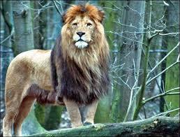 El hombre León, una historia real Images?q=tbn:ANd9GcQk3gpPxcnbU0JQsI1J8IB9qjMPcpGW7PWQ7mKzHQz_AR2ZZHqX