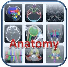 Brain Mri Anatomy Headneckbrainspine