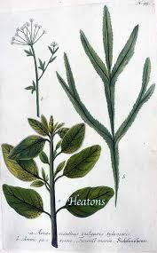 images about BOTANICA on Pinterest           Science conspectus