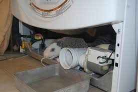 mold inside of washing machine smells horrible how to fix