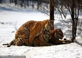 Edhe kafshet kan ndjenja Images?q=tbn:ANd9GcQli1HKI4PeUuUI91XmdQ7CLYwbdQynnpcF6_HSU6qPtFSSAjBg_w