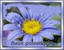 buon pomeriggio con un fiore
