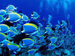 Wallpapers Backgrounds - Aquarium Wallpapers