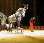 Bom exemplo Senado aprova a proibição de animais em circos na ...