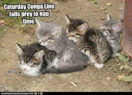Anny's Points of View: Yay! It's Caturday!