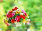 ดอกไม้ในกระถาง no.3421 Wallpaper Download