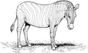 Printable zebra coloring pages coloring me coloring     Imhoff Custom Services