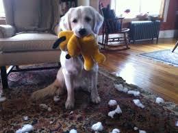 belgian shepherd stuffed animal what to do when you can u0027t feed your dog raw food