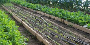 companion vegetable garden layout vegetable garden planning with greensgrow u0027s farmer katelyn