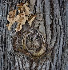 15 stunning examples of owl camouflage bored panda