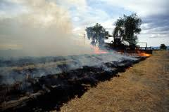 image of a corn field being burnt, borrowed from t2.gstatic.com