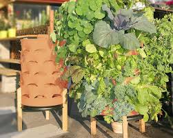 Vertical Garden Vegetables by Vertical Veggie Garden In A 55 Gallon U0027drum U0027 Green Bean Connection