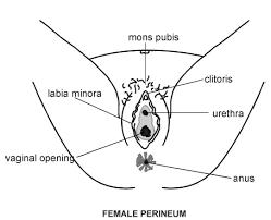 women basic anatomy