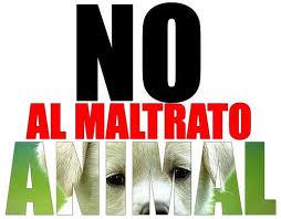 Denunciá el maltrato animal
