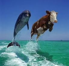 Le dauphin et la vache Images?q=tbn:ANd9GcQsusHUTQA4W04vHqtxqHRMc91r2rnL4htI5LE_kUcskpYE8wcGpA
