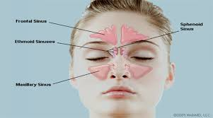 Structure Of Human Anatomy Anatomy And Structure Of The Human Nose Healthncure Org