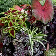 partial shade container garden indoor tropicals and exterior annuals
