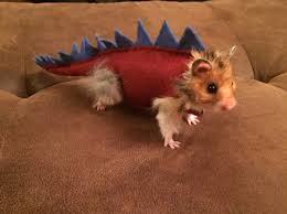 Dinosaur Halloween Costumes Hamster Dinosaur Halloween Costume Steven Dinosaur
