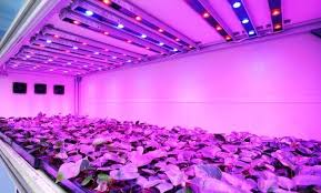 indoor grow lights lights decoration