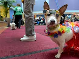 halloween parade background therapy animals are everywhere but proof that they help is not