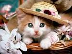 ¡Post con musica que anuncia mi REGRESO! ¡La loca de los gatos ha vuelto! (?)  [♫] Images?q=tbn:ANd9GcQuWbeG0dtKSpMnQYZ2XDJ40VX1Q49JU0XEb8QFRjRyYkcLD9lS5axTsy_-