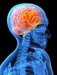 تصاویر آناتومی بدن انسان
