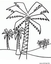 coloriage palmier plusieurs palmiers dessin