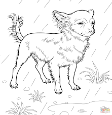 cool design chihuahua coloring page printable page free pdf