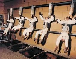Cincuenta desastres de la experimentación en animales