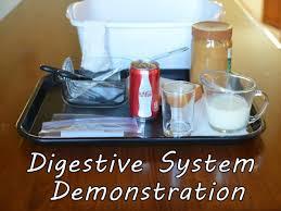 Image result for digestive system investigation ks2