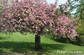 فصل الربيع Images?q=tbn:ANd9GcQwElCbSw6WNjSWdFTcGHZFSMm3pIVAufevo-qKlyWEe_fpLL6-Lg