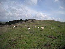 belgian sheepdog breeders in texas anatolian shepherd wikipedia