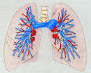 the left <b>pulmonary artery</b>