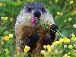 Groundhog Spring 300x225