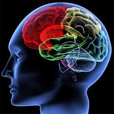 Image result for brains