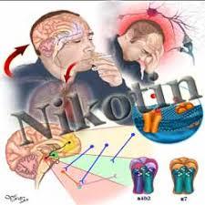 bahaya nikotin bagi kesehatan