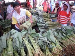 image of taro or gabi plant stalks and leaves sold at the market