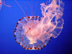 Jiggly Jellyfish from Dazzling to Deadly (72 Splendid Photos) lovethesepics.com