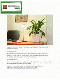 Office Desk Plants by Three Desk Plants For Your Workplace In Australia Pdf Pdf Archive