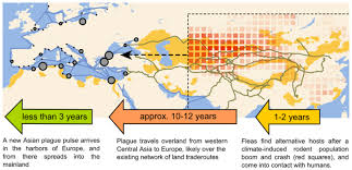 plague outbreaks that ravaged europe for centuries were driven by
