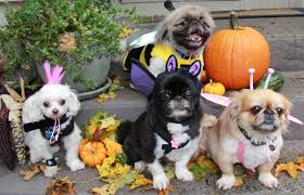 13 fun pet halloween costumes scary puppy silly kitty