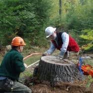 Master of Forestry   School of Forest Resources   University of Maine