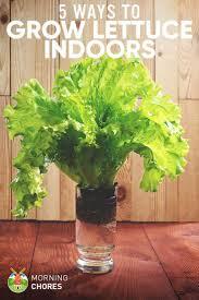 best 25 indoor greenhouse ideas only on pinterest indoor herbs