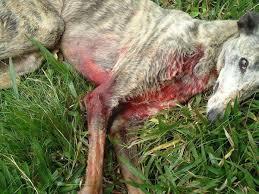 Cão é morto a tiros por empresário dentro de hotel em Gramado (RS)
