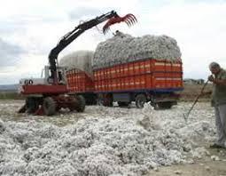 Από αύριο η καταβολή της ειδικής επιδότησης βάμβακος από την Αγροτική Τράπεζα