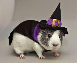 Winnie Pooh Dog Halloween Costume Calling Fuzzy Scary Cute Pets Petsmart Halloween