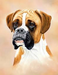boxer dog uk learn how to use pastel pencils pastel pencils pastels and