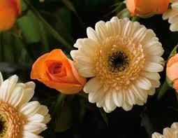fresh air... fresh Dutch flowers... to give you all a good feeling! Images?q=tbn:ANd9GcR3iwTW8XLKWH1WW0AFL1lOJKyGQWIf7KUhRZghN4296j4F8w4&t=1&usg=__Rwz9DUGEfZG5-cKXJpx89Pf1jJA=