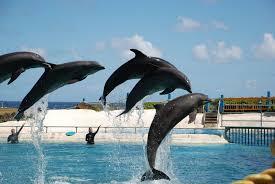 Sea Life Park Hawaii